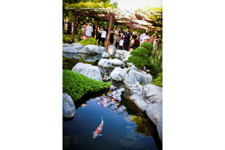 Koi pond archives san diego wedding photographer for Japanese friendship garden san jose koi fish