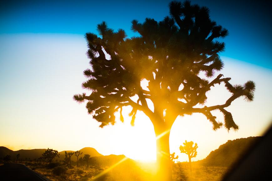 joshua-tree-family-photos-02