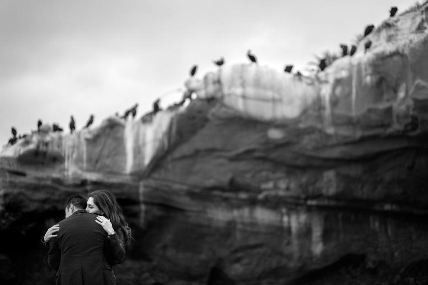 la jolla cove portrait with birds